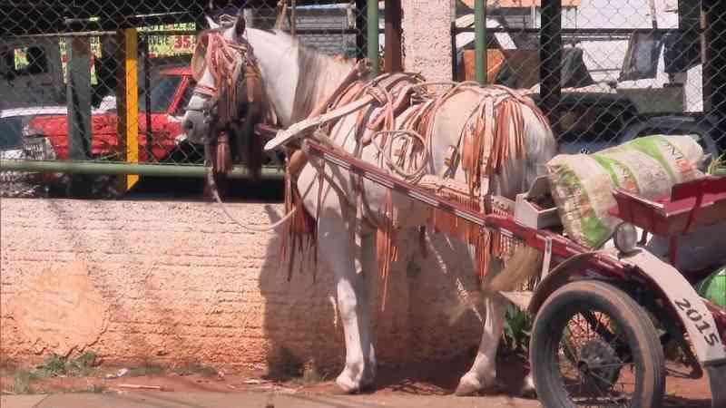Repugnante: projeto de lei do GOVERNO que prevê abate de animais apreendidos nas ruas é encaminhado para Câmara Legislativa do DF