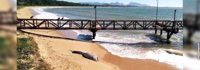 Filhote de baleia é encontrado morto em praia de Anchieta, ES