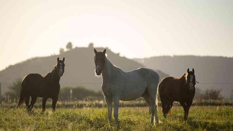 Polícia investiga mistério de 'ritual bizarro' com 10 cavalos mortos e mutilados na França