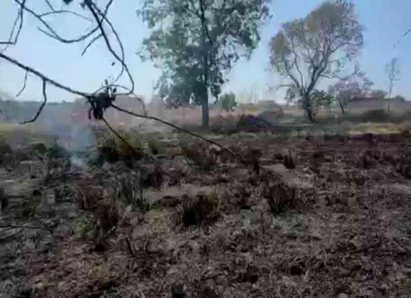 Cães passam mal com incêndio próximo a ONG para animais, em Aparecida de Goiânia, GO