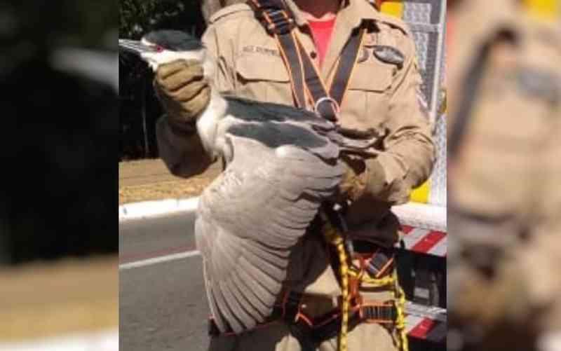 Bombeiros resgatam ave que ficou presa em árvore a 30 metros de altura por causa de linha de pipa, em Goiânia, GO
