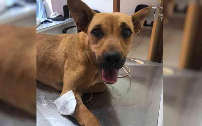 Homem é preso suspeito de atirar em cadela 'que o incomodava', em Rio Verde, GO