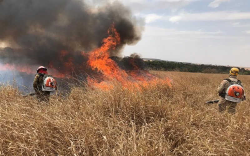 Incêndio em reserva ambiental onde filhote de veado-campeiro foi resgatado, em Caldas Novas, Goiás — Foto: Corpo de Bombeiros/Divulgação