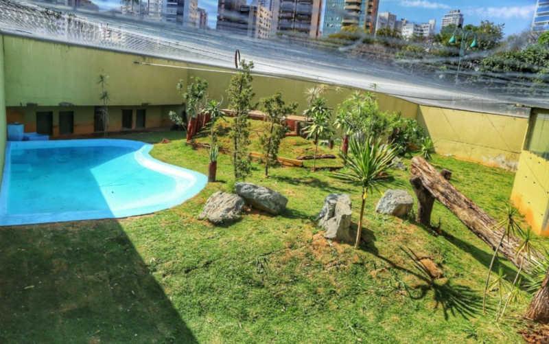 Novo recinto é adaptado para abrigar urso Robinho no zoológico de Goiânia, Goiás — Foto: Jackson Rodrigues/Arquivo pessoal