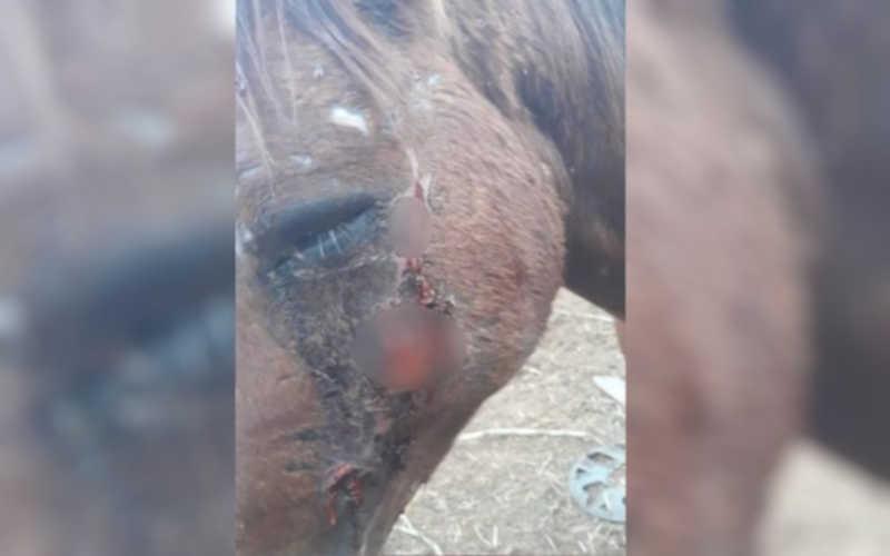 Homem é detido suspeito de agredir cavalo com pauladas e chutes em Itauçu, GO