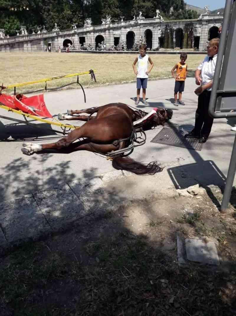 Cavalo de carruagem turística morre em dia de 'calor escaldante' na Itália