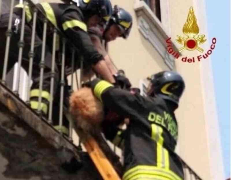 Itália: morreu cão deixado na varanda dois dias após discussão de casal