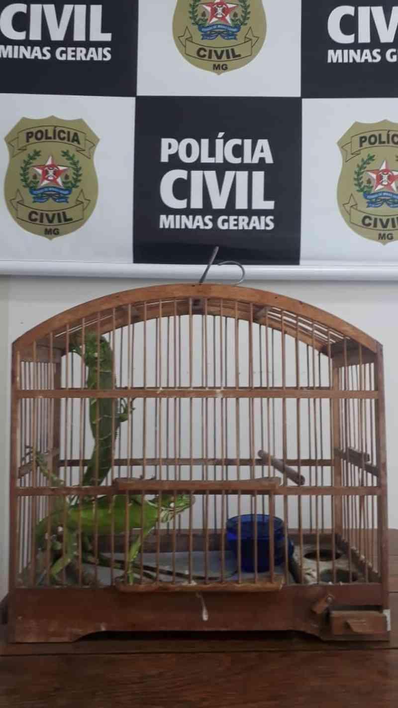Polícia Civil apreende iguanas que foram transportadas pelos Correios em Coronel Fabriciano, MG