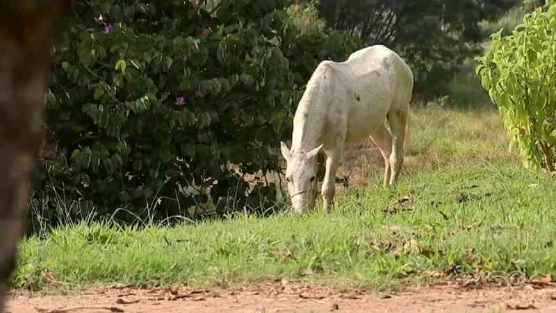 Animais de médio e grande porte passam a ser recolhidos das ruas em Formiga, MG