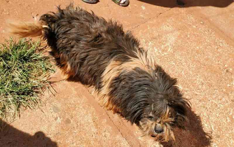 Polícia ambiental registra nova ocorrência de maus-tratos de cães em Ituiutaba, MG