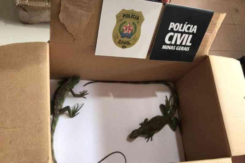 Polícia Civil prende suspeito de tráfico de animais e de maus-tratos em Juiz de Fora, MG