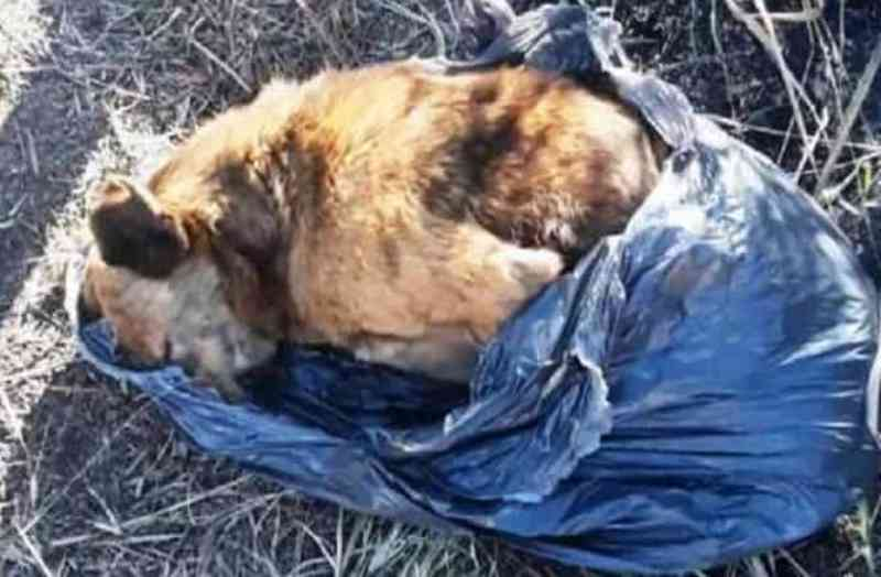 Denúncia de envenenamento e mutilação de cães de rua em Lavras, MG