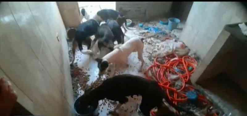 Polícia investiga maus-tratos e abandono de cães em residência de Muzambinho, MG