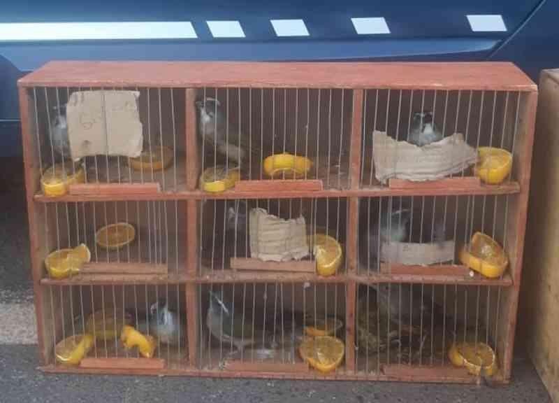 PRF apreende 25 aves silvestres dentro de carro na BR-365 em Patos de Minas, MG