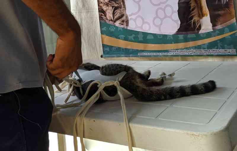 Prefeitura repassa recursos à Sovipa para castração de mil animais em Viçosa, MG