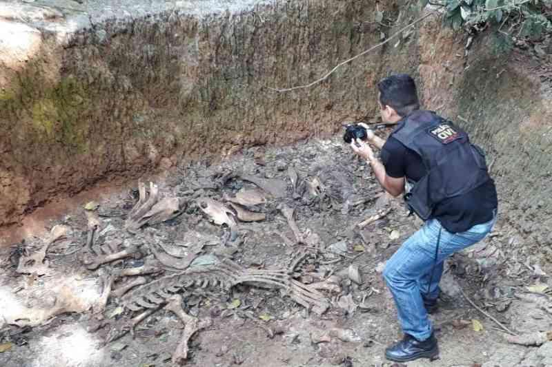 Abatedouro clandestino comercializava carne de equino como se fosse de bovino, agora em Guarani, MG