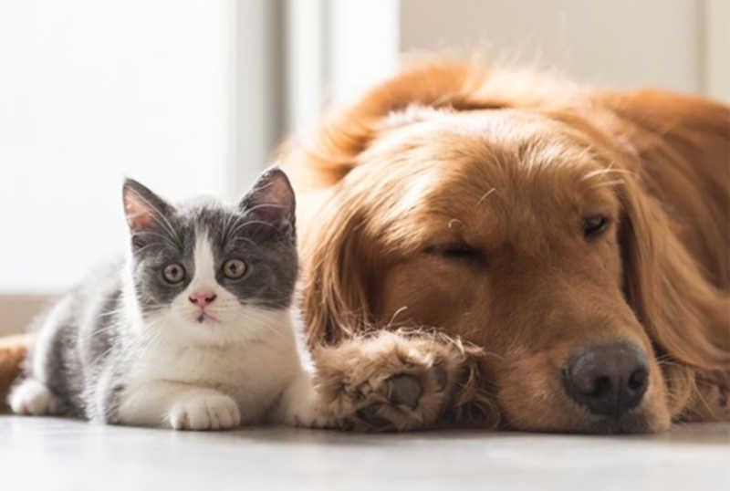 Prefeitura de Betim, na Grande BH, oferece castração gratuita de cachorros e gatos