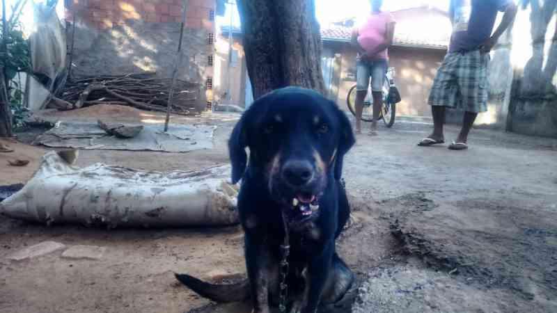 Cachorro sofre ferimentos graves após ser baleado por militar em MG; Polícia Civil instaurou inquérito para investigar o caso