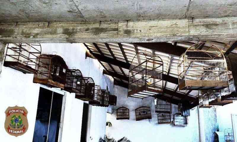 Polícia Federal desmantela esquema de tráfico de animais silvestres em Minas Gerais