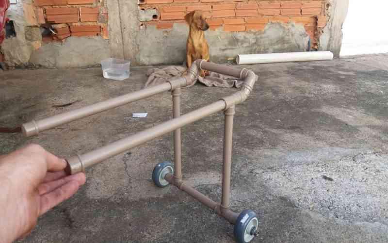 Policial adota cão abandonado e cria cadeirinha de canos de PVC com ajuda do irmão em MG