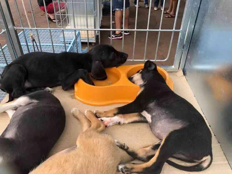MS: lei contra maus-tratos de animais em Campo Grande endurece com multa de até 3,5 mil