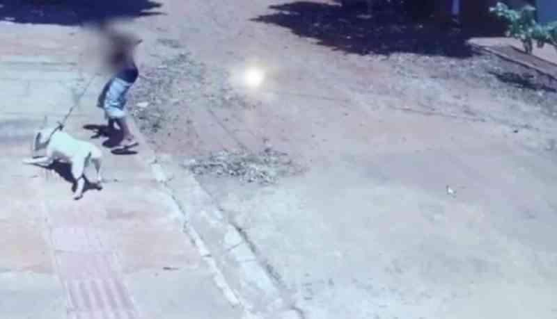 Cachorro fica gravemente ferido após homem instigar pit bull a atacar