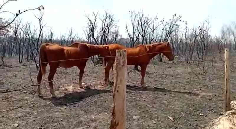 Cavalos sofrem queimaduras durante incêndio e são salvos por brigadistas em Cuiabá, MT