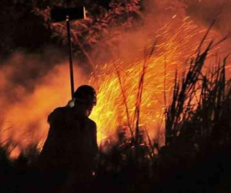 Vídeo mostra animais agonizando após fogo no Pantanal de Poconé, MT