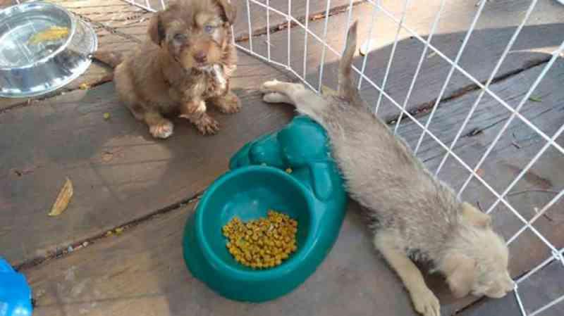 Prefeitura retoma feira permanente de adoção de 100 animais em Sorriso, MT
