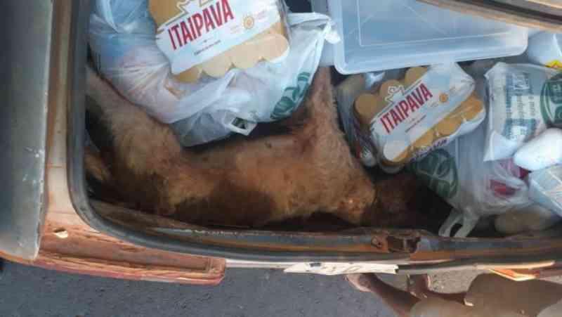 Tutor esquece cachorro em porta-malas e animal acaba morrendo em Várzea Grande, MT