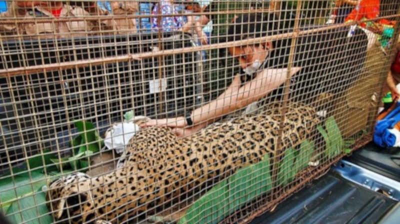 Campanha arrecada remédios, materiais e equipamentos para tratar animais resgatados de incêndios no Pantanal de MT