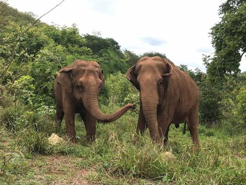 Santuário abriga animais resgatados — Foto: Santuário de Elefantes/Divulgação