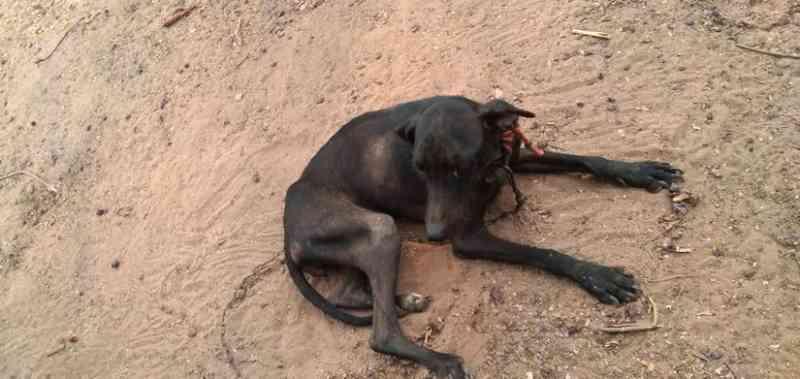Suspeito é preso por maus-tratos a animais e posse irregular de arma de fogo em Arenápolis, MT