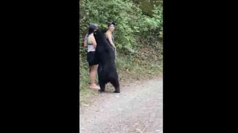 Urso que se aproximou de mulheres durante selfie foi capturado e castrado