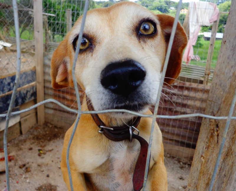 O incrível caso da empresa que chutava cachorros
