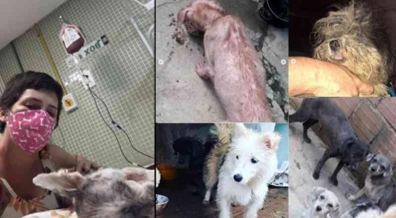 Protetora pede ajuda após resgate de 15 cães que eram usados para reprodução em Jaboatão dos Guararapes, PE