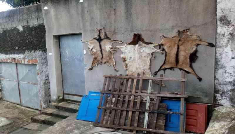Rituais macabros e tortura a animais no Sítio Histórico de Olinda, PE
