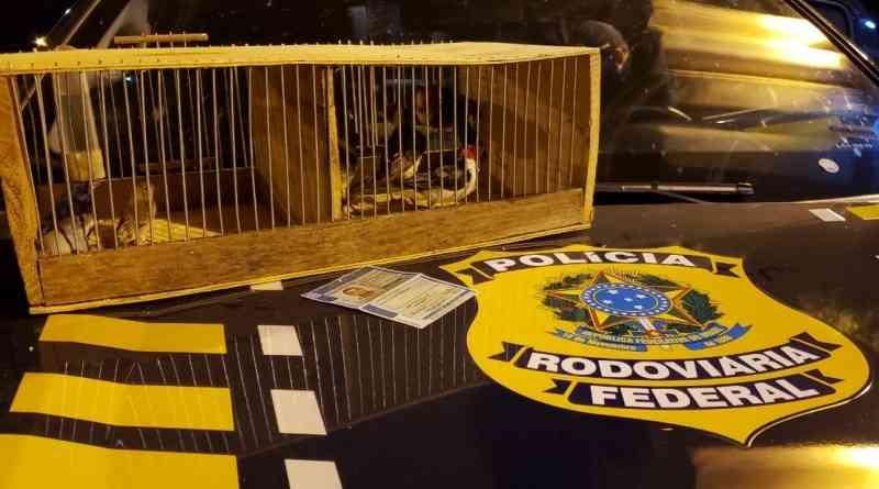 Homem é preso por tráfico de animais e pássaros são resgatados em Picos, PI