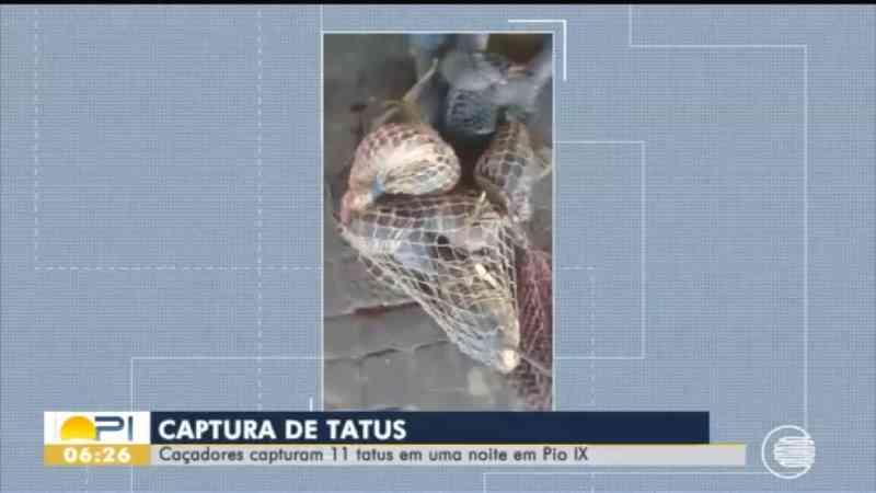 Suspeitos de caçar tatus são intimados no Sul do Piauí; Ibama do CE acompanha caso