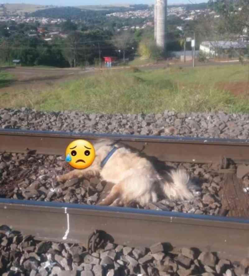 Cachorro é encontrado morto e amarrado na linha do trem em Apucarana, PR