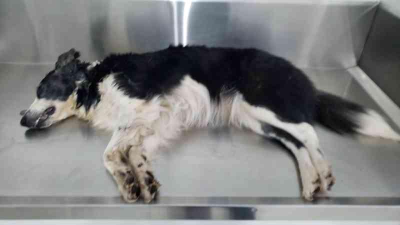 Vários animais são mortos após envenenamento em massa no Bairro Country, em Cascavel, PR