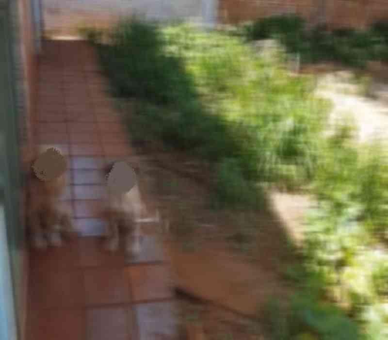 Em Cascavel (PR), cães resgatados são autores de ação que busca indenização contra antigos tutores