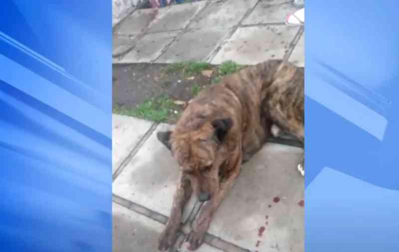 Casal responsável por matar cachorro com golpes de enxada é identificado