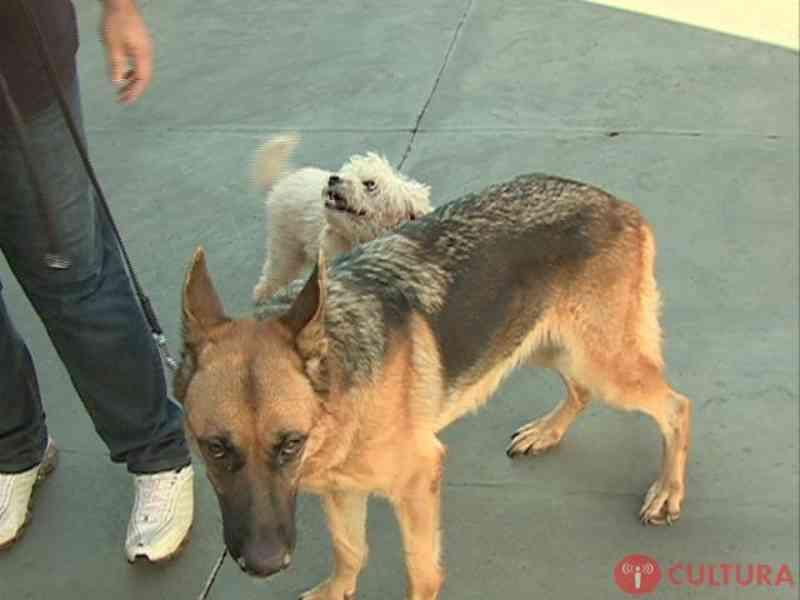 Prefeitura de Foz do Iguaçu (PR) retoma encoleiramento de cães para prevenção da leishmaniose