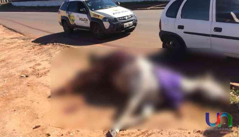 Cavalo é encontrado morto com sinais de maus-tratos em Mariluz, PR