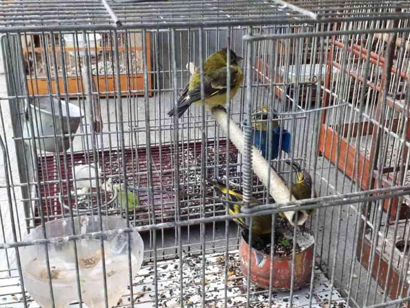 Polícia resgata mais de 370 pássaros mantidos em cativeiros irregulares em 29 cidades do Paraná