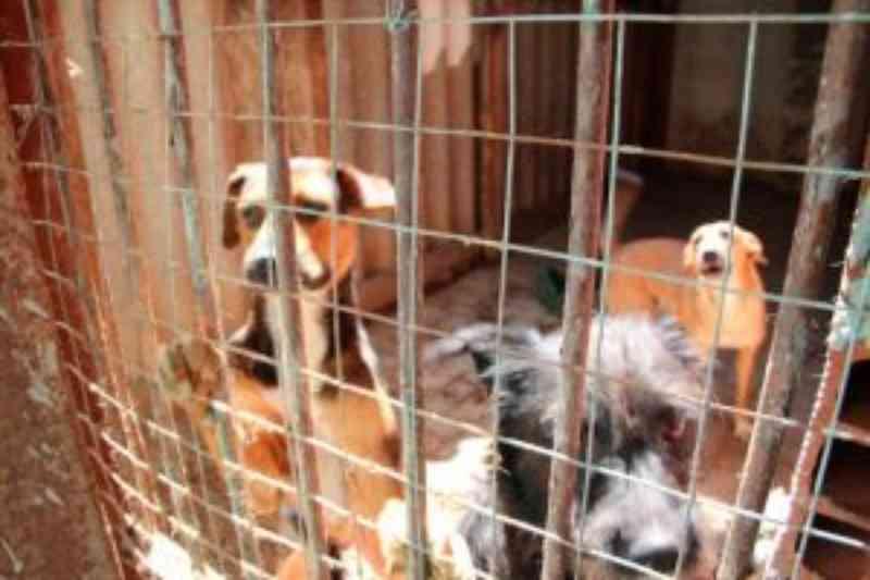 TJ mantém decisão que obriga Prefeitura de Campo Mourão (PR) a construir canil para animais de rua