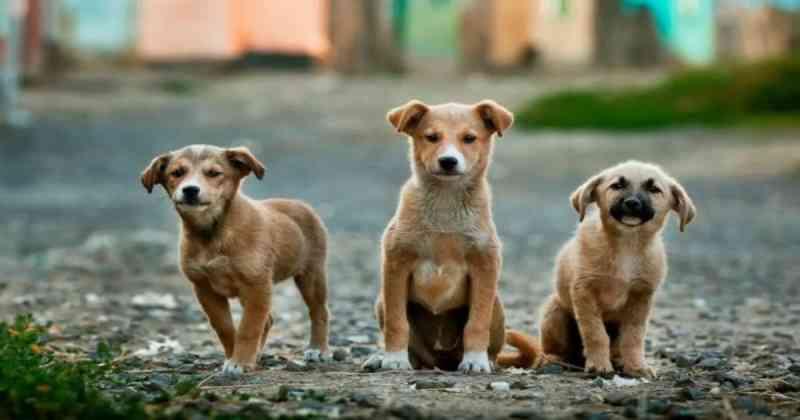 Portugal: câmara de Braga vai reembolsar cidadãos que esterilizem os animais de companhia