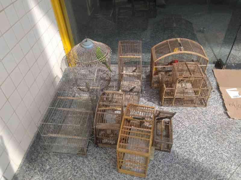 Após denúncia de maus-tratos, jovem é flagrado com nove pássaros silvestres em Piraí, RJ