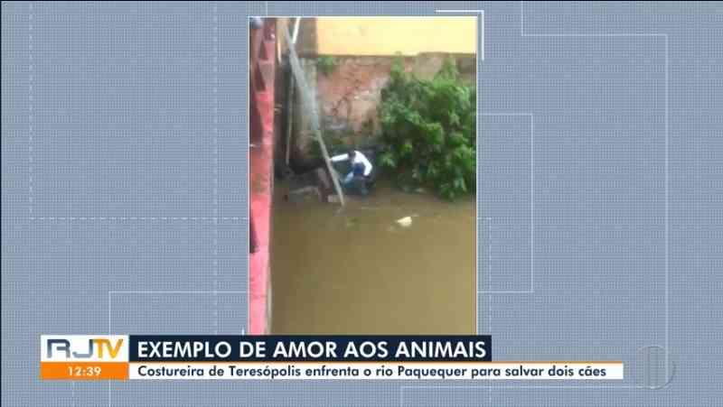 Mulher enfrenta rio para salvar dois cães em Teresópolis, no RJ; vídeo